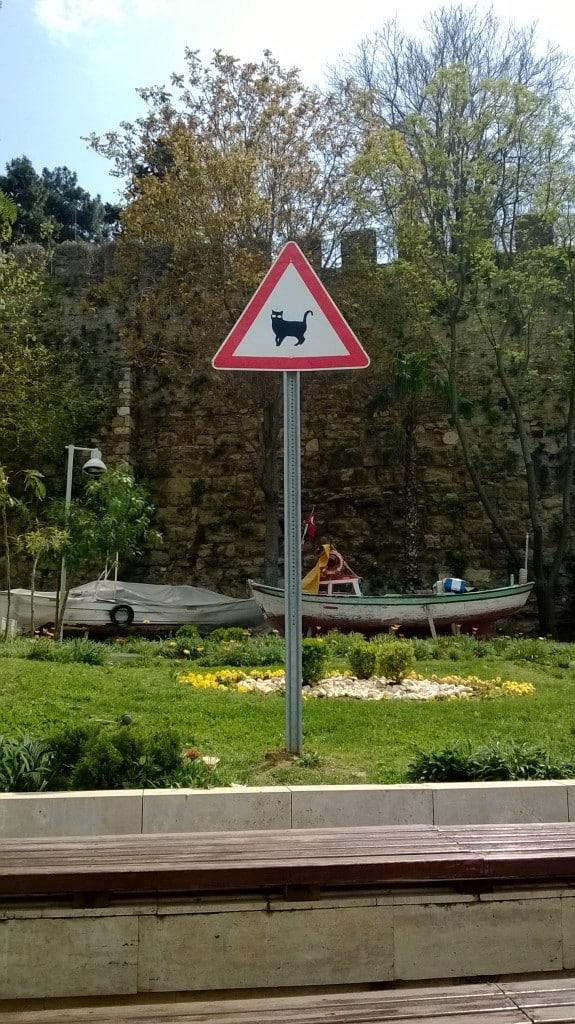 Traversée de chats?