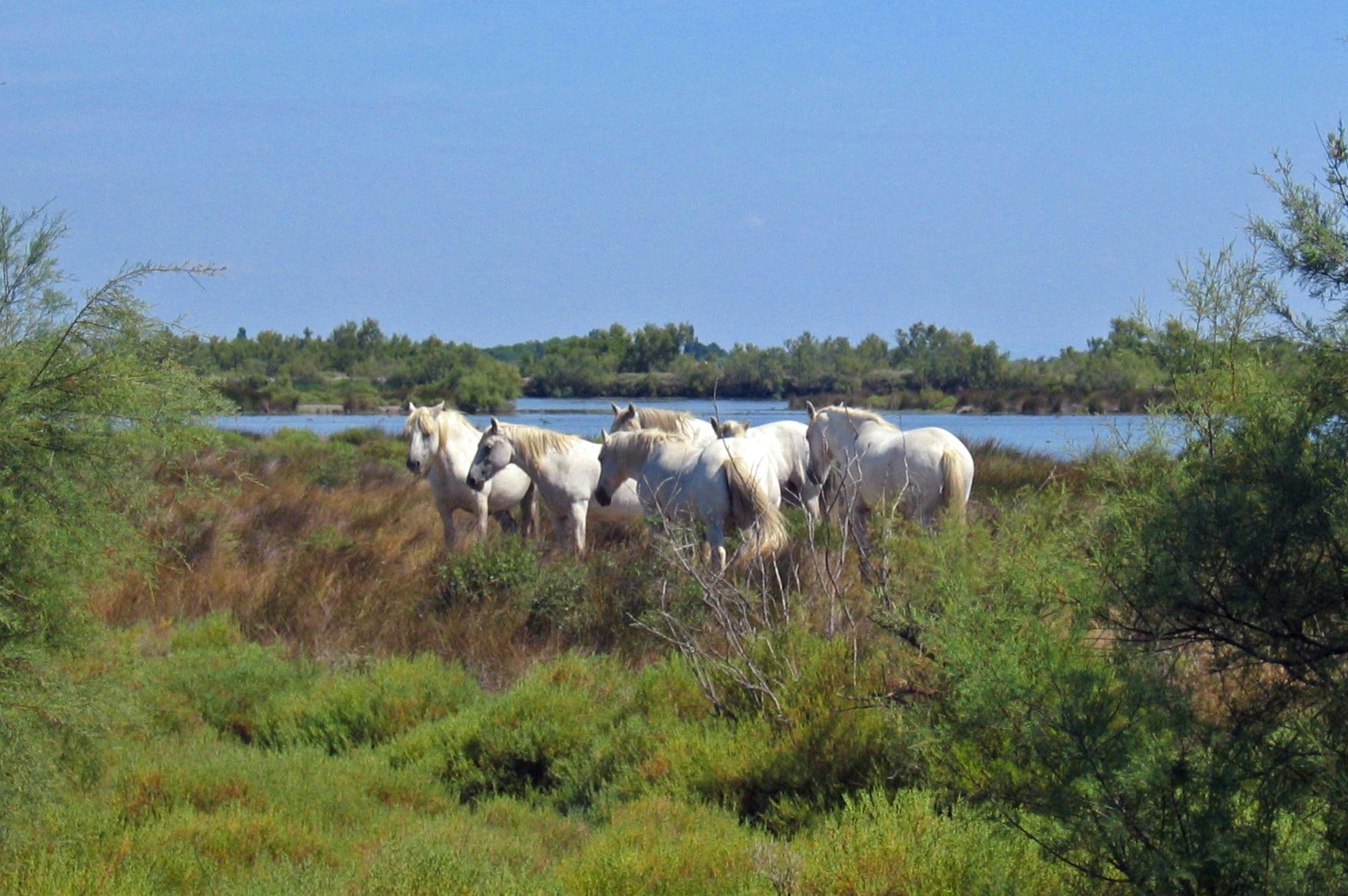 La Camargue entre traditions et espaces naturels